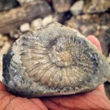 Fósil de la Sierra